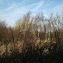 Hazel_catkins_west_view._31.1.09