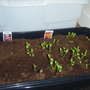 my_seedlings_013.jpg