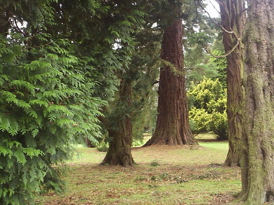 The Arboretum, Camperdown Country Park, Dundee.