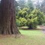 Camperdown House Arboretum