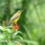 Sunbird_11