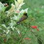 Sunbird_9