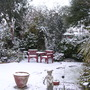 My garden this morning