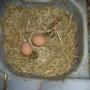 Eggs sarnies for brekkie