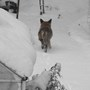 Snow_day_011