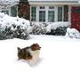Bouba_4_snow