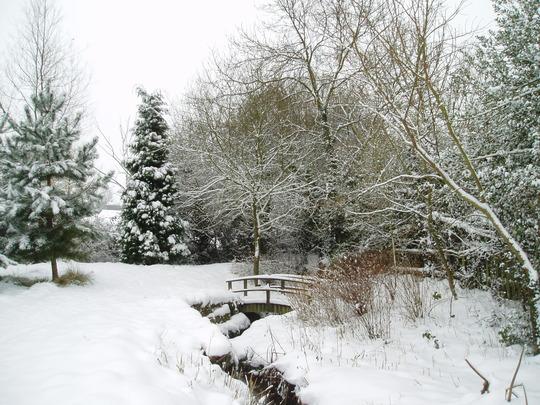 A Corner Of My Garden Today 5.2.09