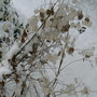Winter_honesty