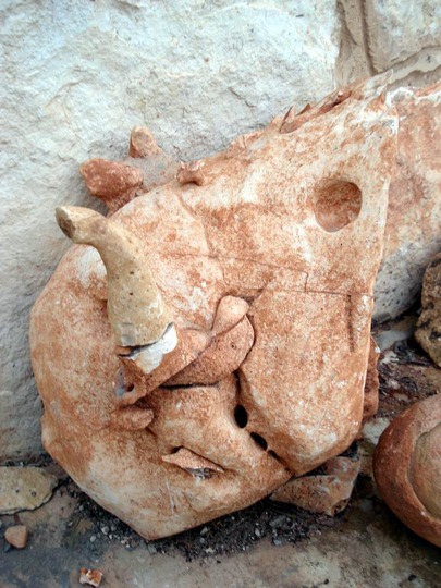 my rocks collection /dinasaurs head.
