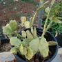 Cactus_collection_6