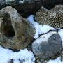 Garden_stones