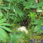 2007_skye_garden_xmas_etc_180