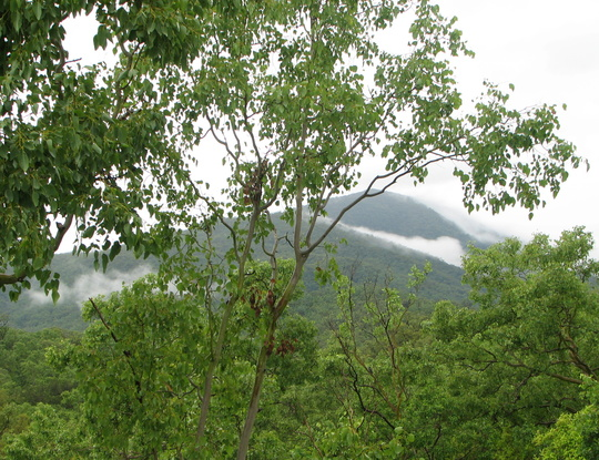 Finally the torrential rain has stopped and we can see the hills!