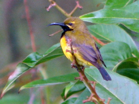 The sunbirds are also out and about again!