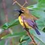 Sunbird_14