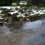 Wet and cold garden