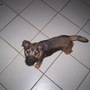 Roxie, 6 months