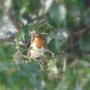 Robins3_31.01_.09_006_1
