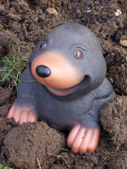 The Mole Could It Be You And Me