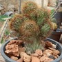 Cactus_collection_14