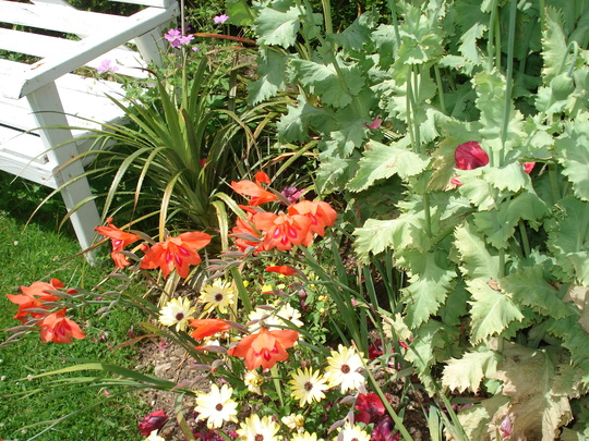 Some glads, a puya and an african daisy