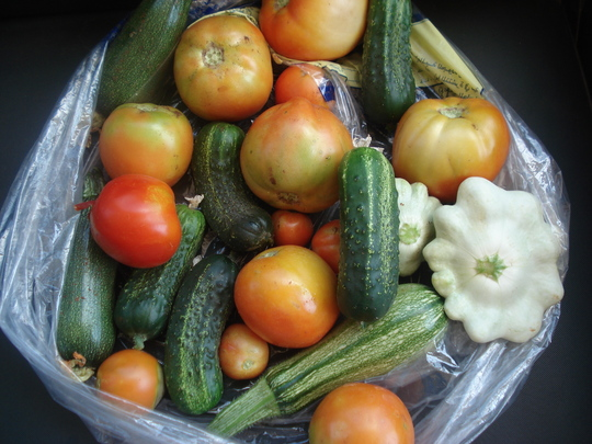 vegetables/last summer