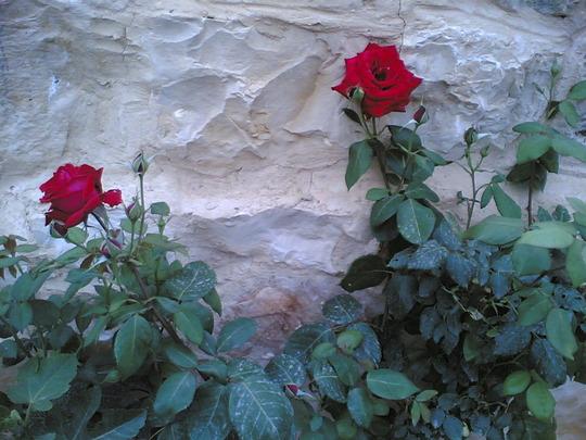 my flowers (my flowers)