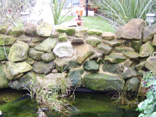 my pond update