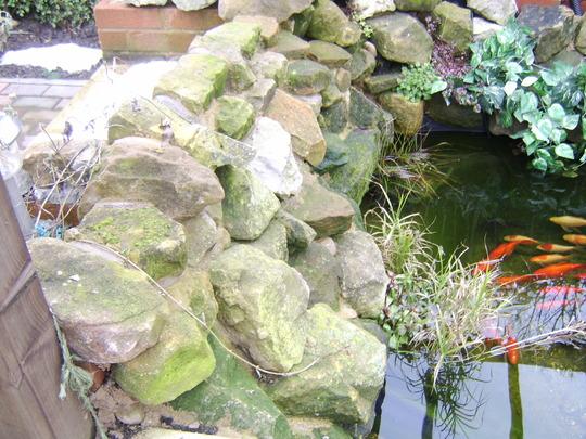 my pond rocks