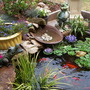 My_new_pond_011
