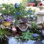 My_new_pond_041