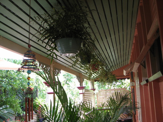 In the courtyard - Hanging pot plants