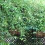 Courtyard_plant_5