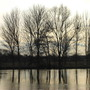 Trees at Laleham Riverside