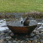 Blackbird_bath_time