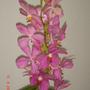 Pink_with_orange_dsc05380