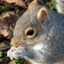 Squirrel2_crop