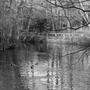 black_and_white_pond.jpg