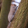squirrel_3.jpg