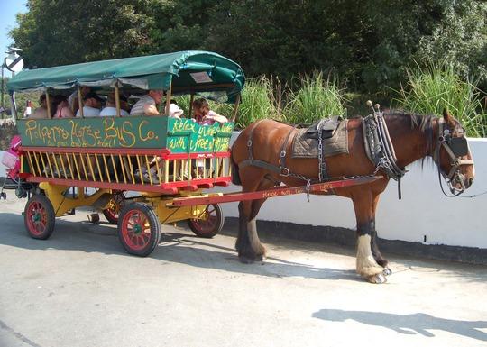 horse_bus.jpg