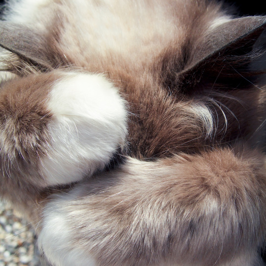 All Fur and Paws