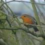 2009_0214birdsgarden0058