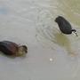 Birds in the pond