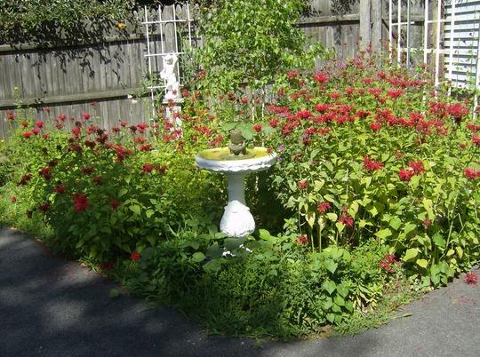 Cherub garden