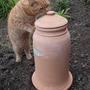Teddy checking out the Rhubarb forcing pot! (Rhubarb)