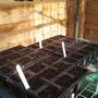 Freshly sown seeds