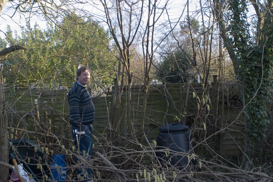 pruning native hedge (hammellis - hazel)