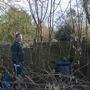 pruning native hedge (hammellis - hazel)