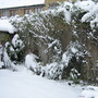 Garden_winter_016
