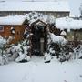 Garden_winter_014
